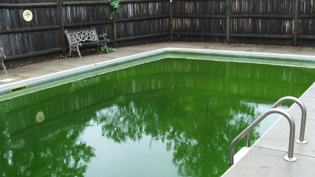 How to diagnose and fix a green pool
