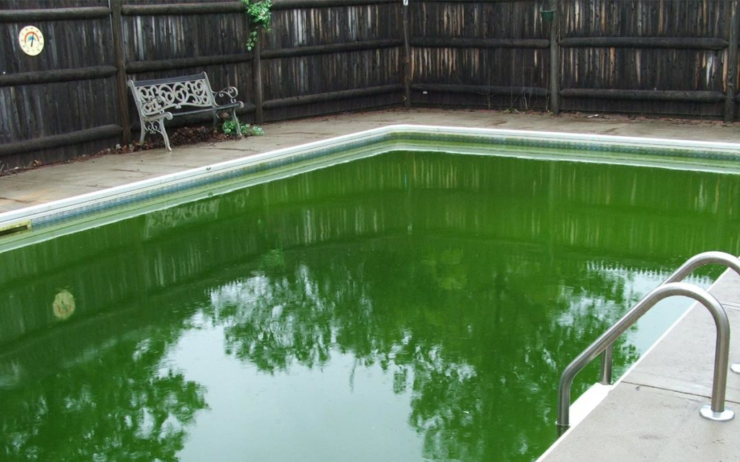 Why Do Pools Go Green?